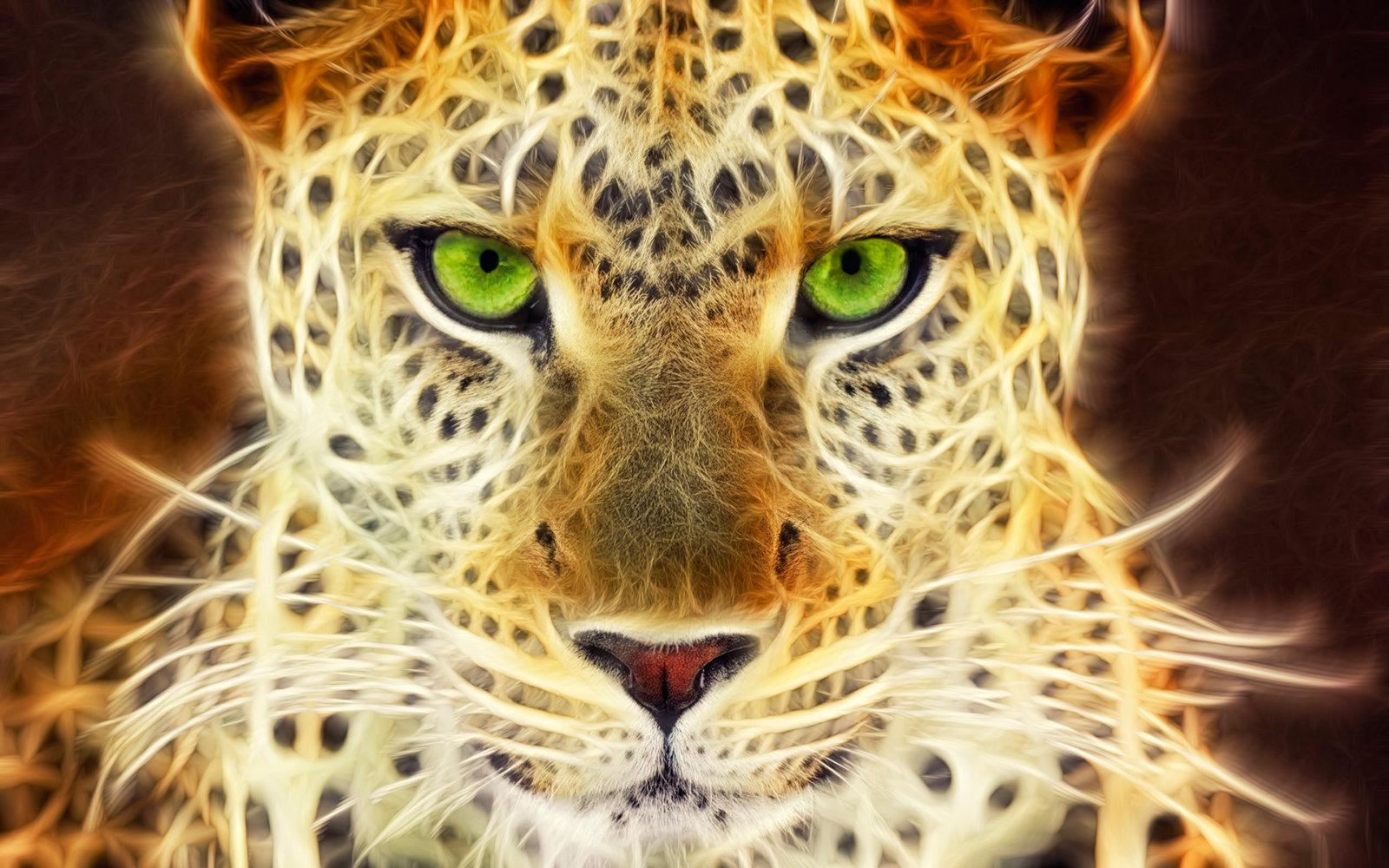 gepard green eyes
