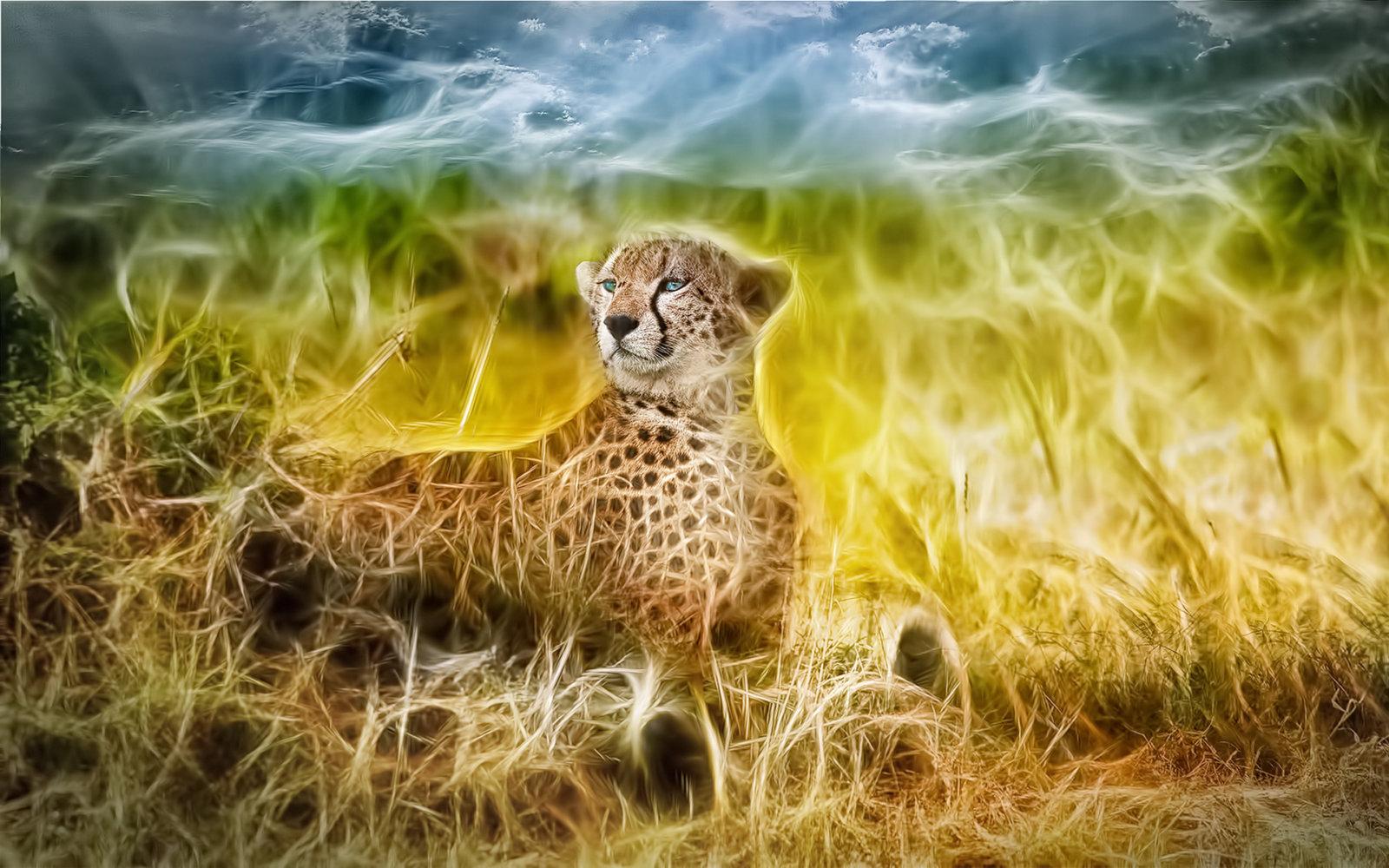 gepard sky